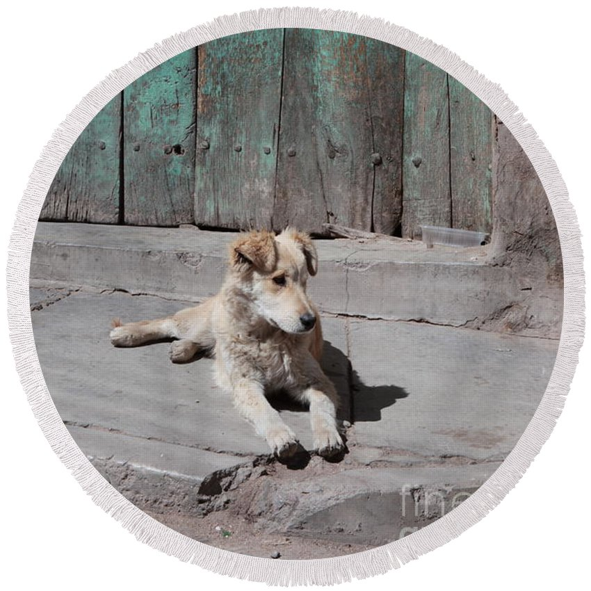 Dog Round Beach Towel featuring the photograph Dog Enjoying A Sunny Doorstep by James Brunker