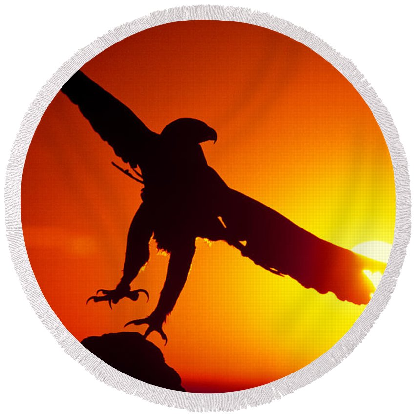 Golden Eagle Round Beach Towel featuring the photograph Sunrise Liftoff Golden Eagle Threatened Species by Dave Welling