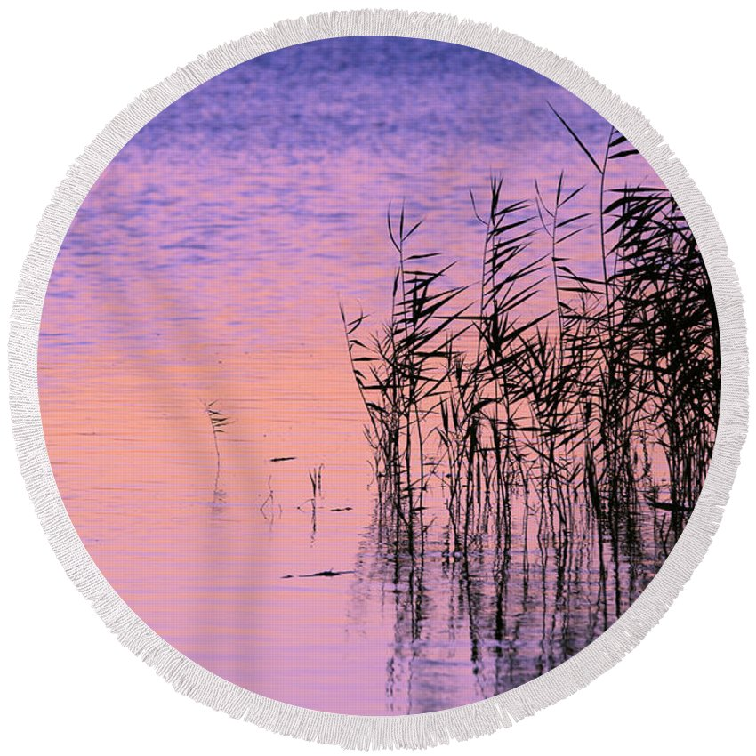 Back Round Beach Towel featuring the photograph Sunrise Reeds by Pete Federico