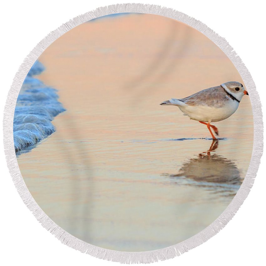 Piping Plover Round Beach Towel featuring the photograph Sunset Piping Plover by Bill Wakeley