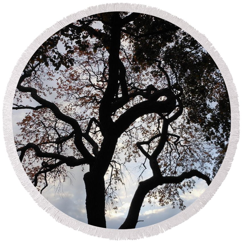 Tree Round Beach Towel featuring the photograph Sunset Silhouette by Charlotte Stevenson