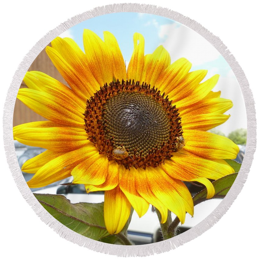 Sunny Round Beach Towel featuring the photograph Sunshine In Country Farm by Lingfai Leung