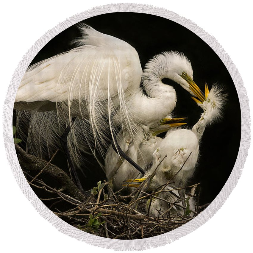 Great Egret Round Beach Towel featuring the photograph Suppertime by Priscilla Burgers