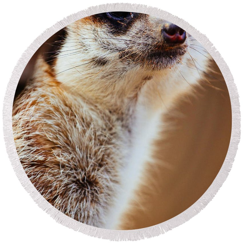 Photograph Round Beach Towel featuring the photograph Suricata by Pati Photography
