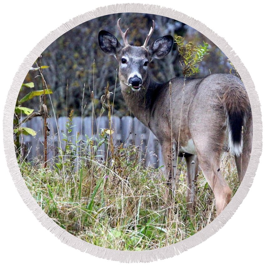 Deer Round Beach Towel featuring the photograph Surprised Deer by Laurel Talabere