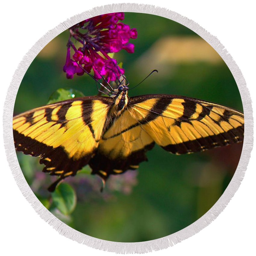 Butterfly Round Beach Towel featuring the photograph Swallowtail 1 by John Feiser