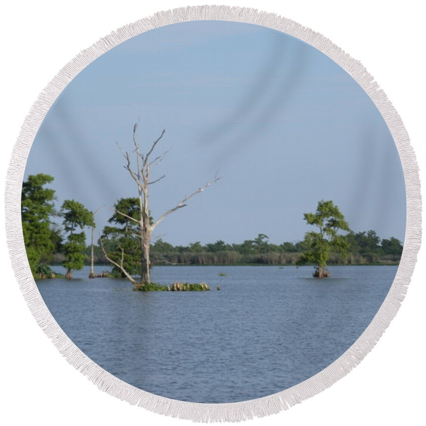 Water Lilly Round Beach Towel featuring the photograph Swamp Cypress Trees by Joseph Baril
