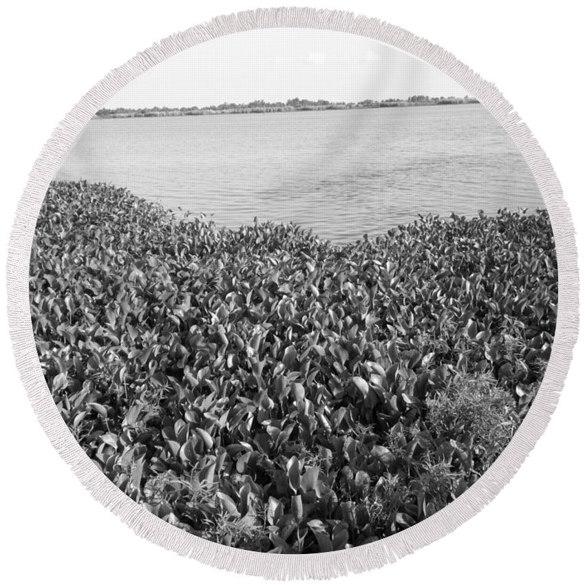 Water Lilly Round Beach Towel featuring the photograph Swamp Hyacinths Water Lillies Black And White by Joseph Baril