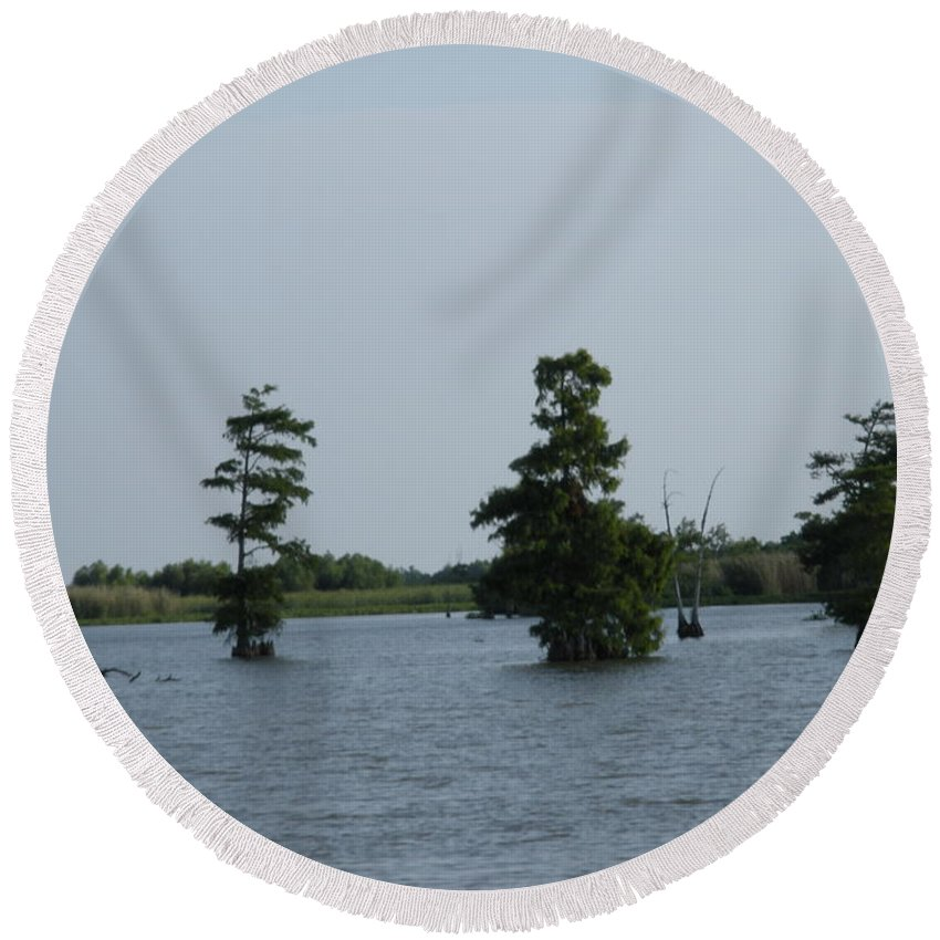 Water Lilly Round Beach Towel featuring the photograph Swamp Tall Cypress Trees by Joseph Baril
