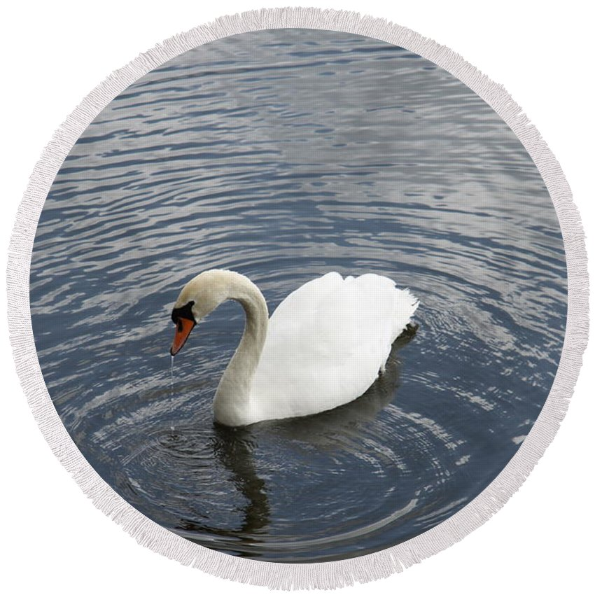Swan Round Beach Towel featuring the photograph Swan Circles by Christiane Schulze Art And Photography