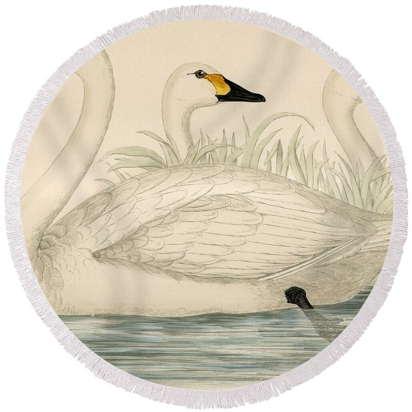 Swans Round Beach Towel featuring the painting Swans by Beverley R Morris