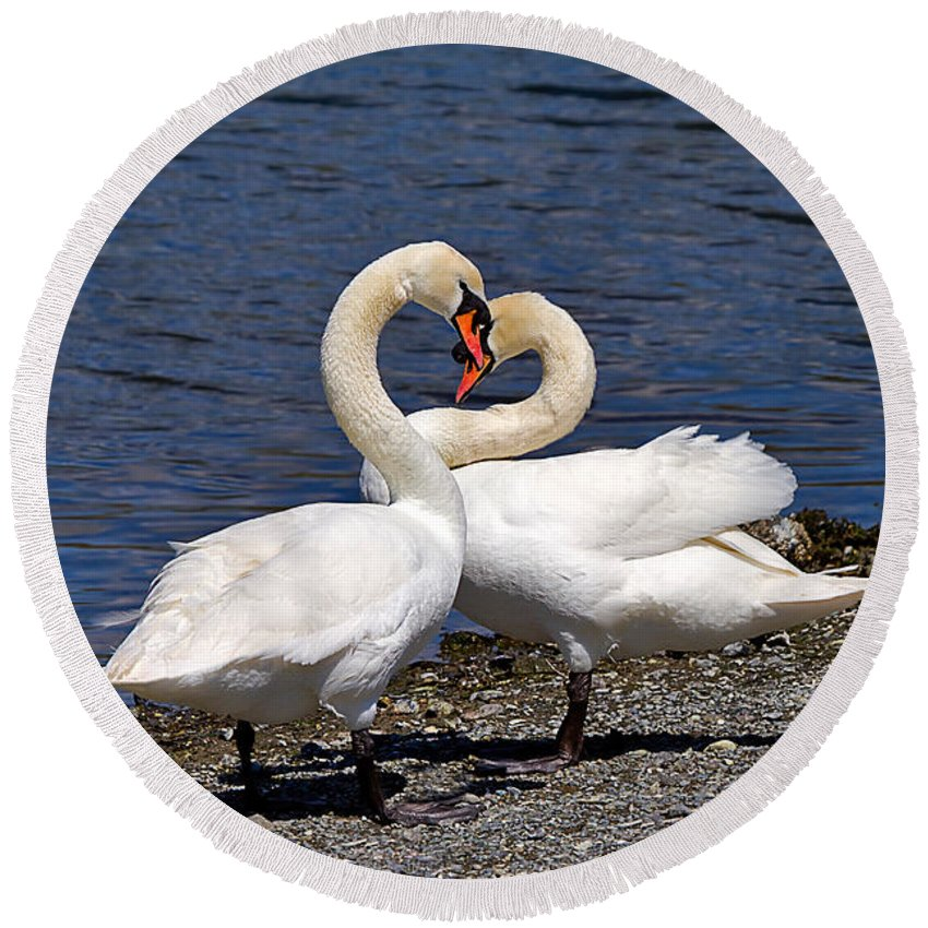 Nature Round Beach Towel featuring the photograph Swans Courting by Louise Heusinkveld
