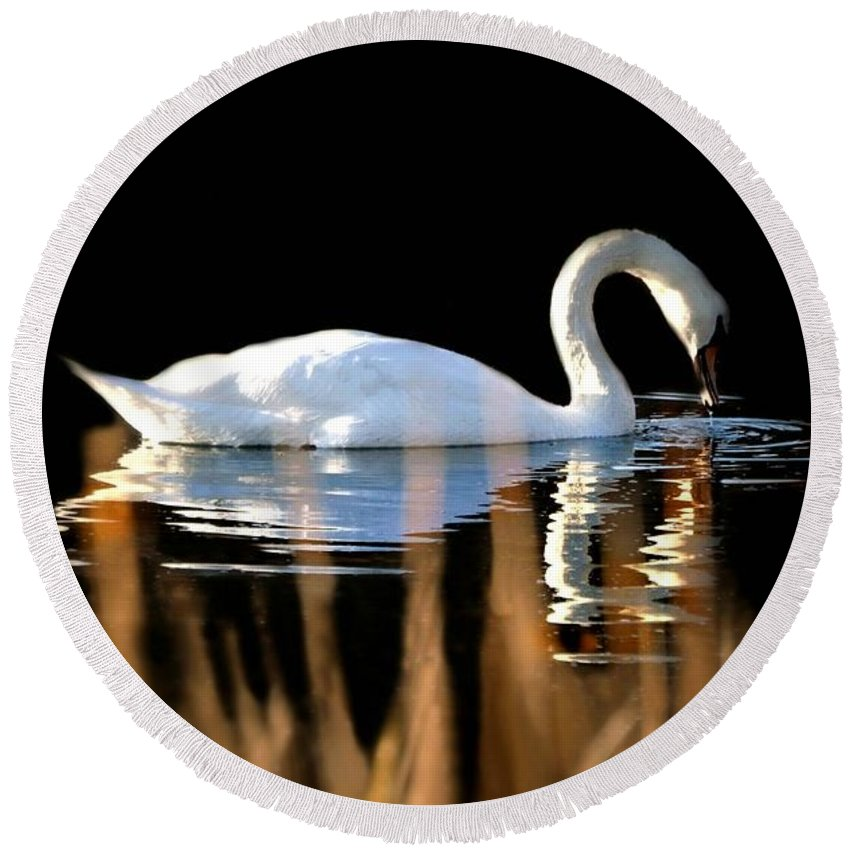 Bird Round Beach Towel featuring the photograph Swan River by Diana Angstadt