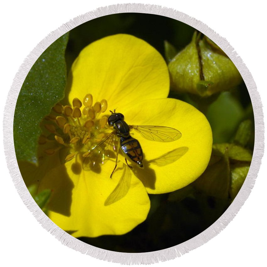 Bee Round Beach Towel featuring the photograph Sweat Bee by Bonfire Photography