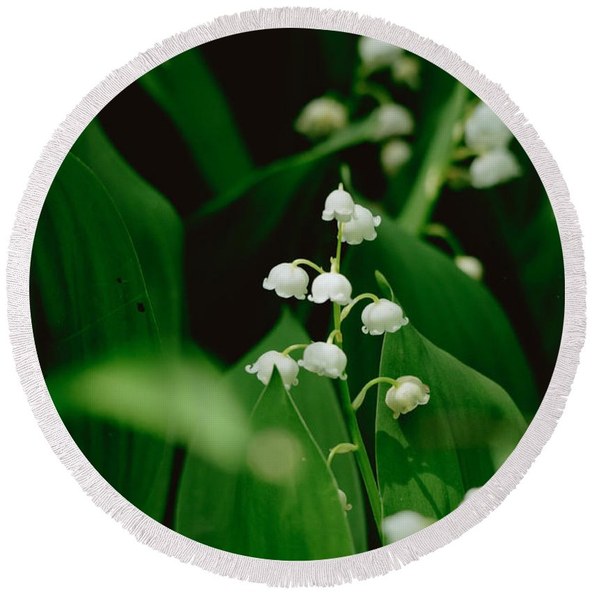 Lily Of The Valley Round Beach Towel featuring the photograph Sweet Scented by Cheryl Baxter