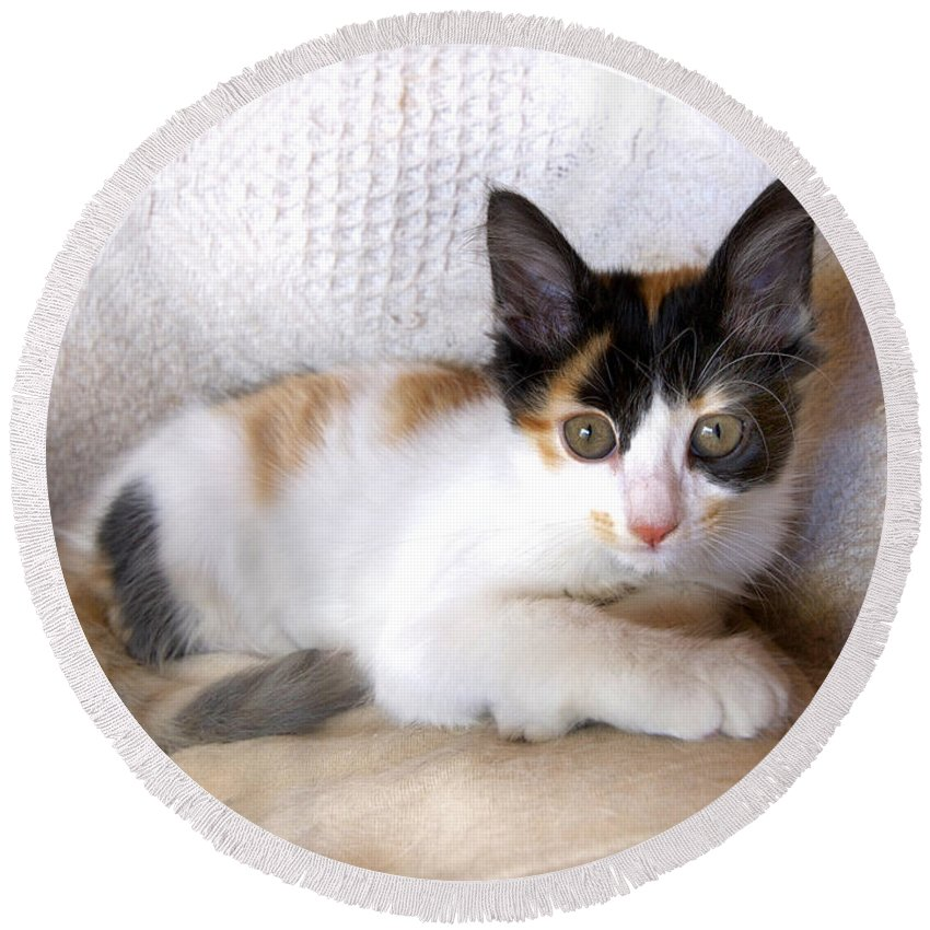 Kitten Round Beach Towel featuring the photograph Sweet The Kitten by Gina Dsgn