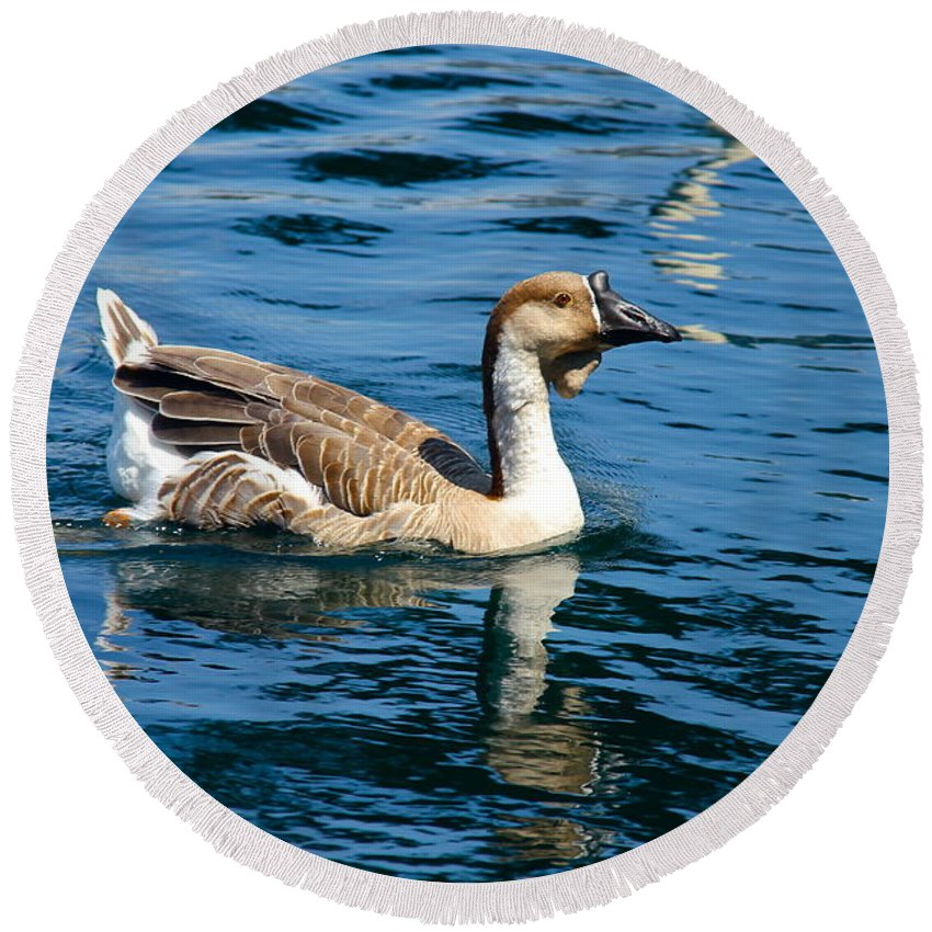 Bird Round Beach Towel featuring the photograph Swimming African Brown Goose by Denise Mazzocco