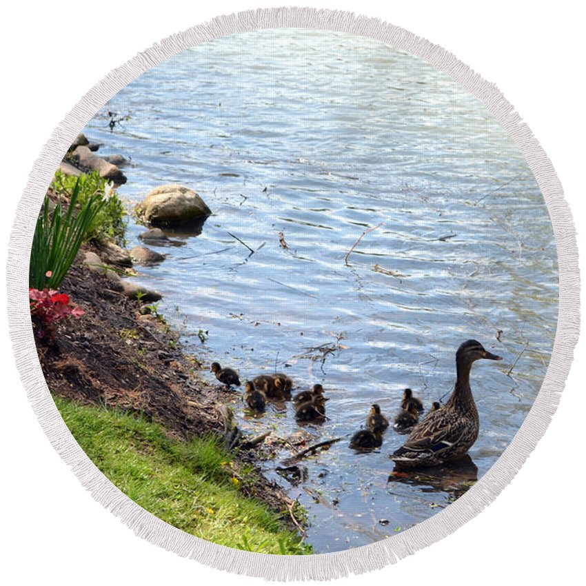Duck Round Beach Towel featuring the photograph Swimming Lessons by Cathy Shiflett