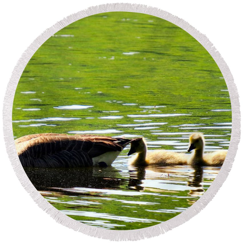 Gosling Round Beach Towel featuring the photograph Tail Shade by Art Dingo