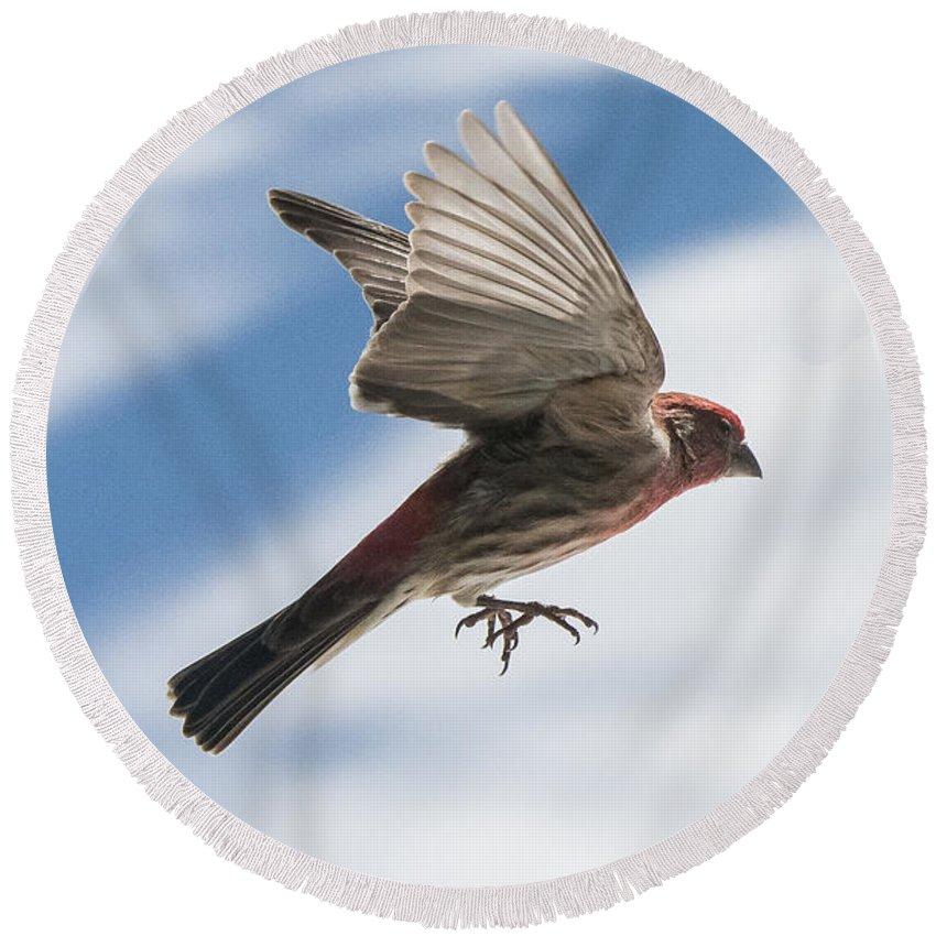 Bird Round Beach Towel featuring the photograph Take Off by Ryan Crane