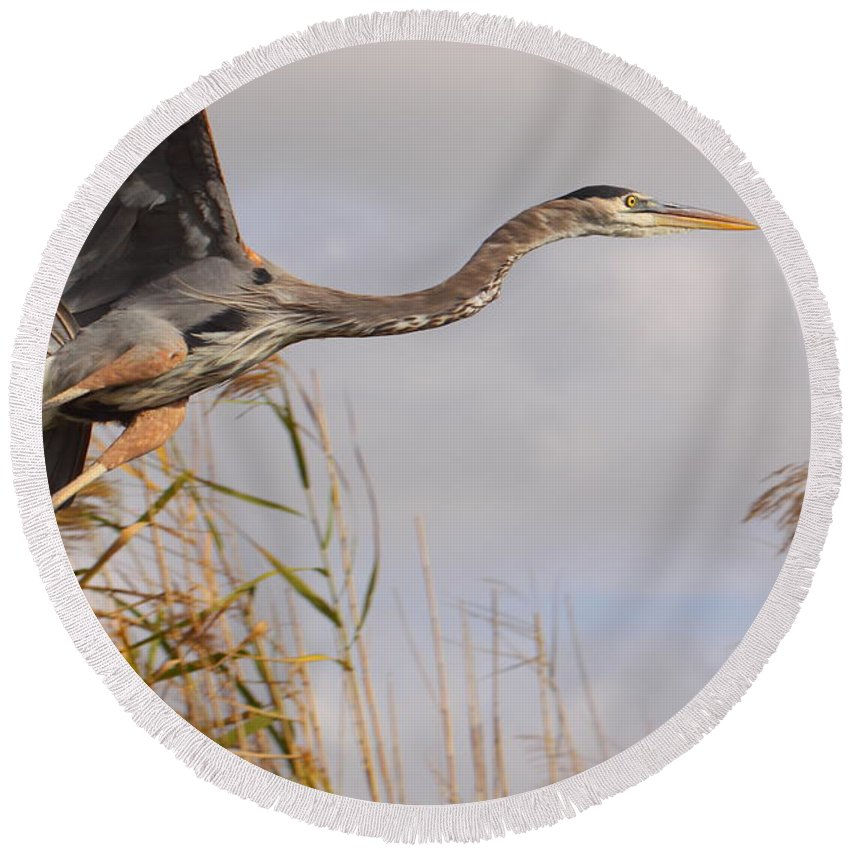 Birds Round Beach Towel featuring the photograph Taking Flight by Bruce J Robinson
