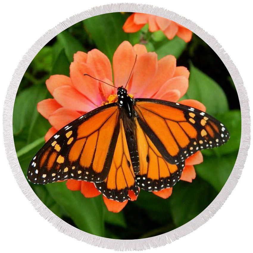 Monarch Round Beach Towel featuring the photograph Tangerine Twosome by Terri Waselchuk
