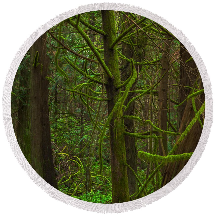 British Columbia Round Beach Towel featuring the photograph Tangled Forest by Jacqui Boonstra