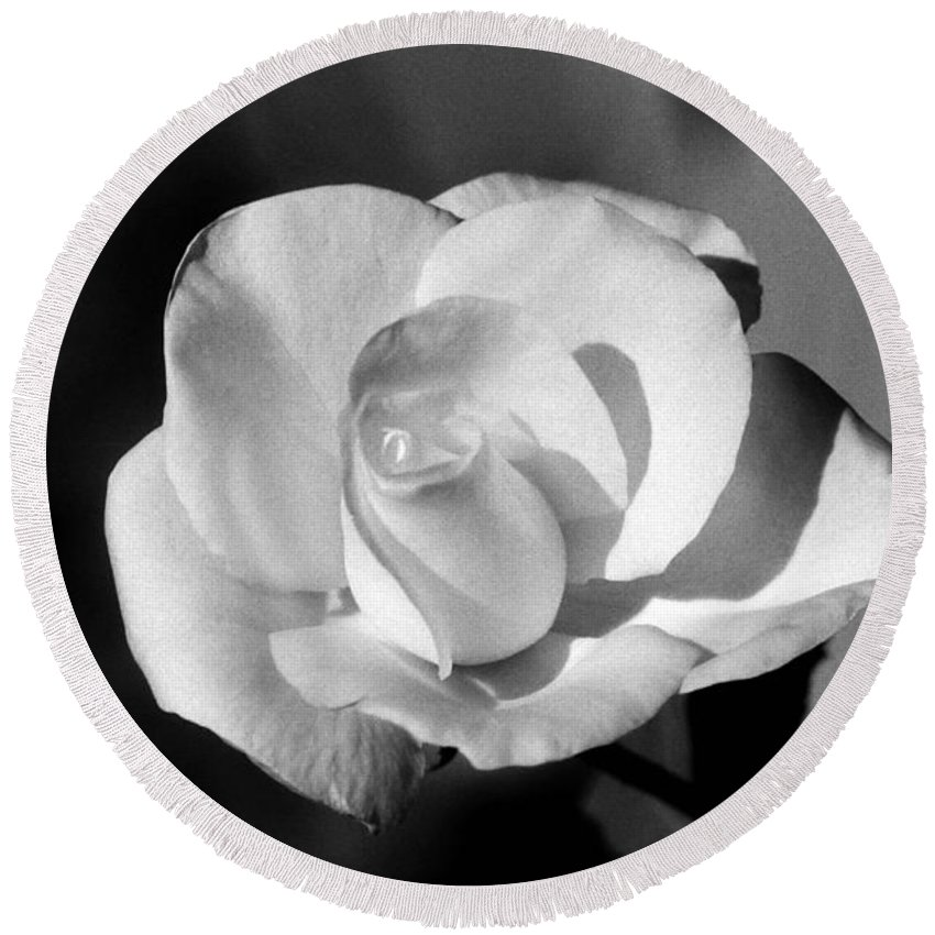 Rose Round Beach Towel featuring the photograph Tea Rose 01 - Infrared by Pamela Critchlow