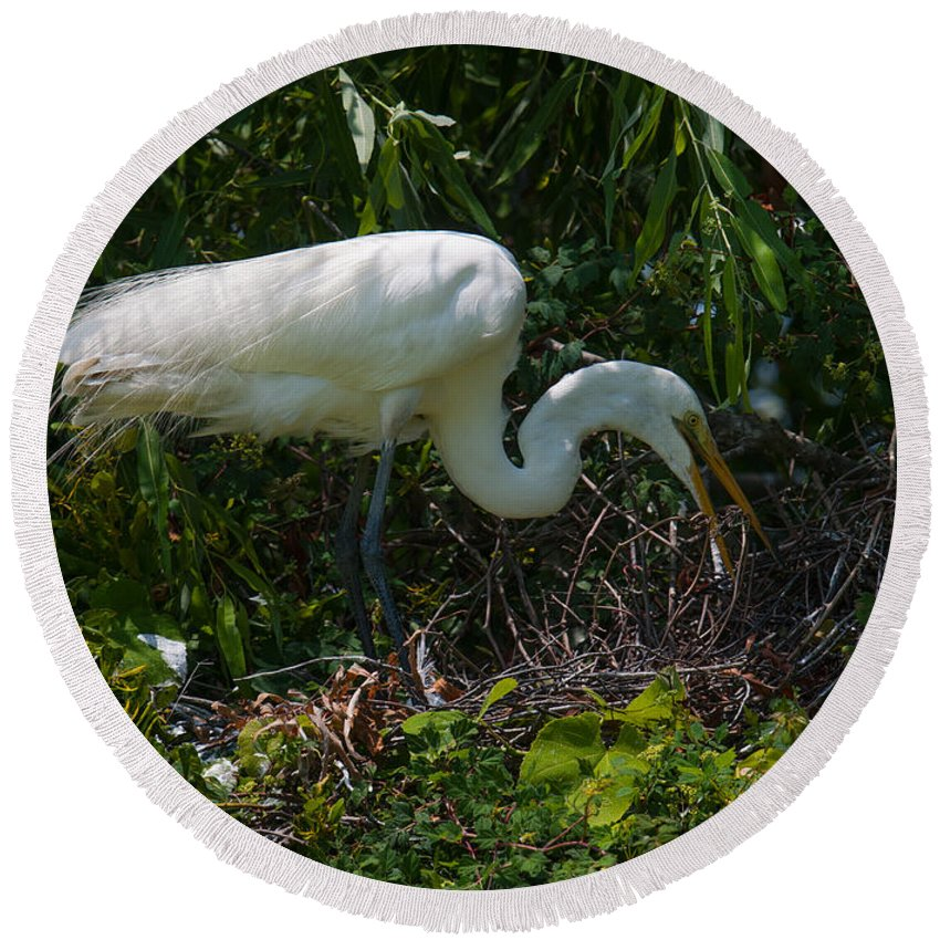 Egret Round Beach Towel featuring the photograph Tending The Nest by Dale Powell
