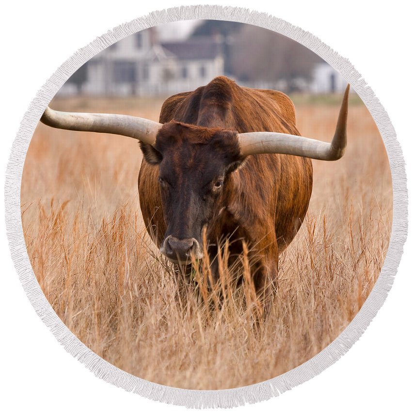 Animal Round Beach Towel featuring the photograph Texas Longhorn by Louise Heusinkveld