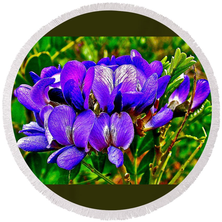 Texas Mountain Laurel Along Window Trail In Big Bend National Park Round Beach Towel featuring the photograph Texas Mountain Laurel Along Window Trail In Big Bend National Park-texas by Ruth Hager