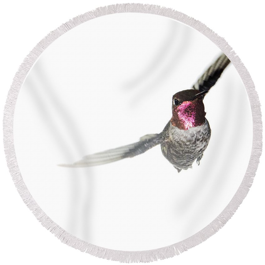 Anna's Hummingbird Round Beach Towel featuring the photograph The Aggressor by Mike Herdering