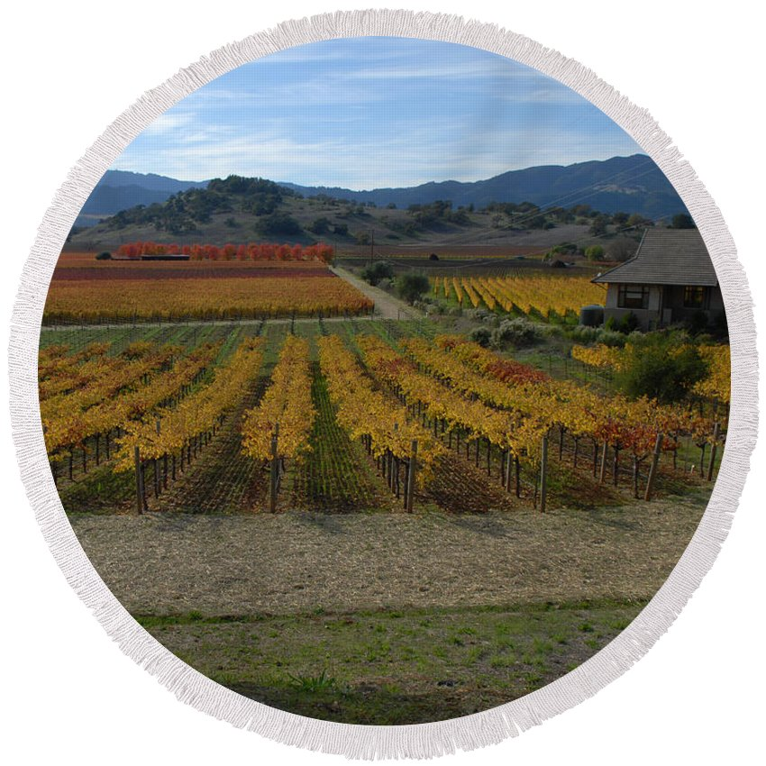 Napa Round Beach Towel featuring the photograph The Artist In The Vineyard by Debra Wales