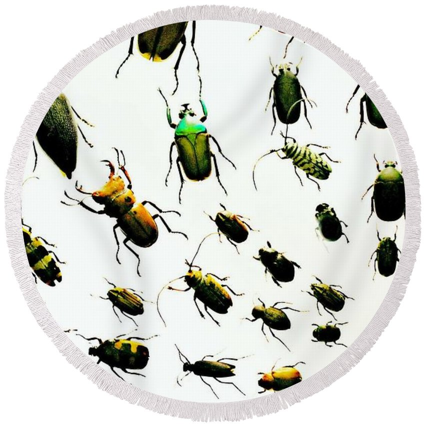 Bugs Round Beach Towel featuring the photograph The Beetles by Diana Angstadt