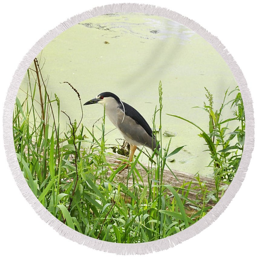 Black-crowned Night Heron Round Beach Towel featuring the photograph The Black-crowned Night Heron by Verana Stark