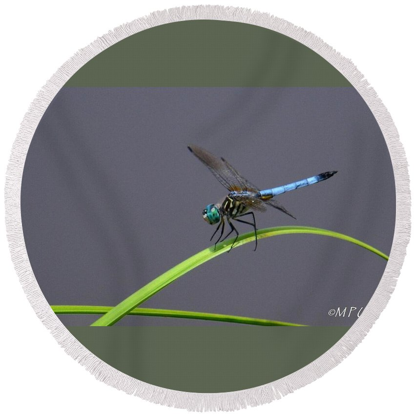 The Blue Dasher Round Beach Towel featuring the photograph The Blue Dasher by Maria Urso