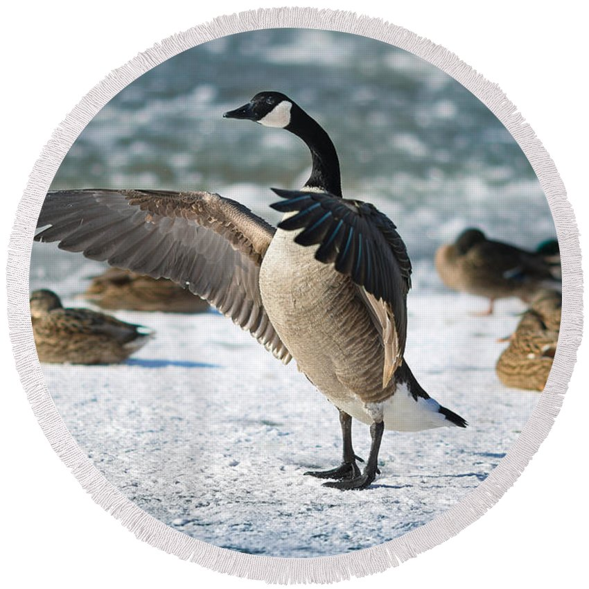 Canada Goose Beach Products