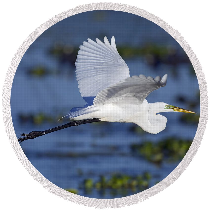 Elegant Round Beach Towel featuring the photograph The Elegant Great Egret In Flight by Gary Langley