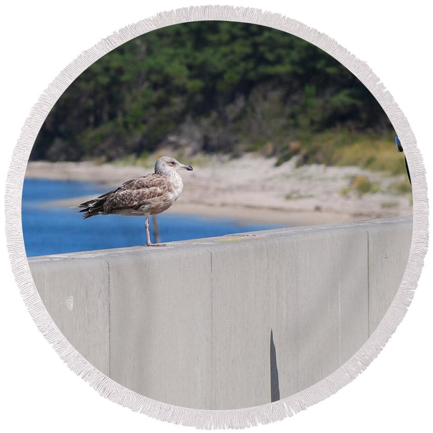 Nature Round Beach Towel featuring the photograph The Encounter by Paulette B Wright