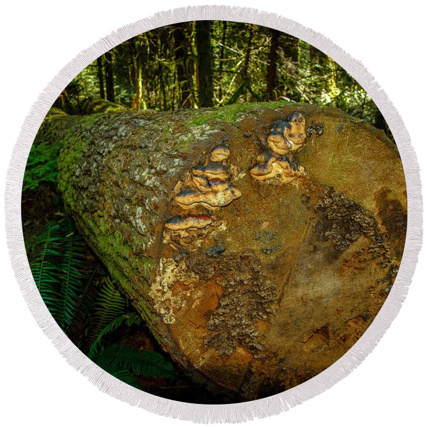 Old Growth Forest Round Beach Towel featuring the photograph The Fallen Collection 6 by Roxy Hurtubise