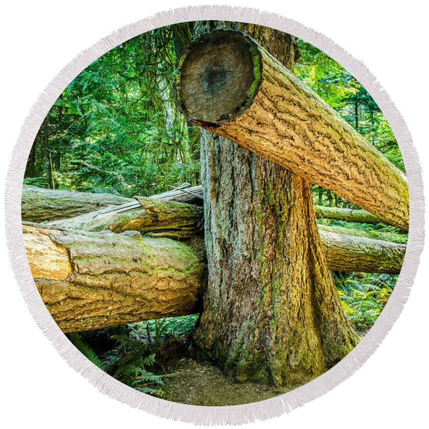 Old Growth Forest Round Beach Towel featuring the photograph The Fallen Collection 9 by Roxy Hurtubise