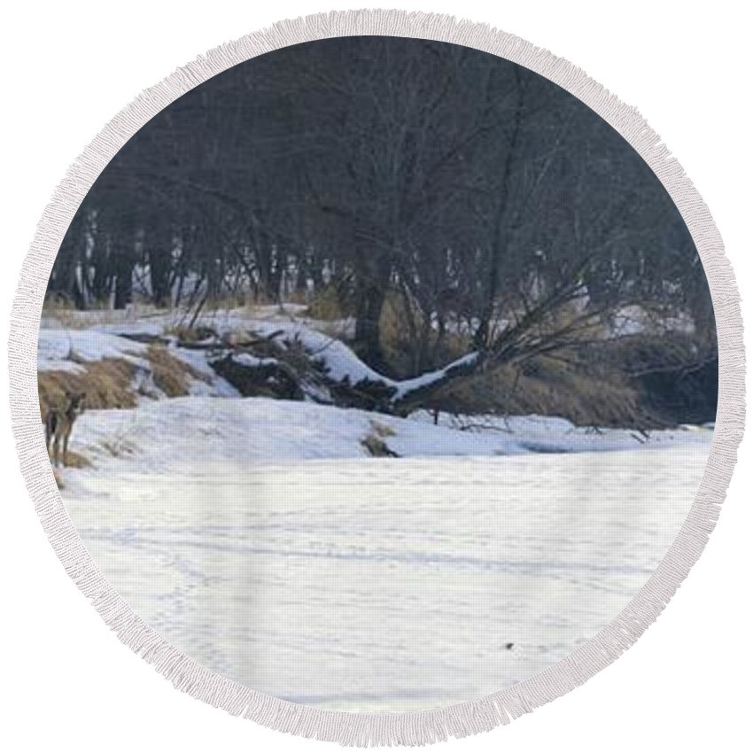 Deer Round Beach Towel featuring the photograph The Gathering by Bonfire Photography