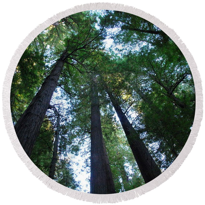 Redwoods Round Beach Towel featuring the photograph The Giant Redwoods I by Kathy Sampson