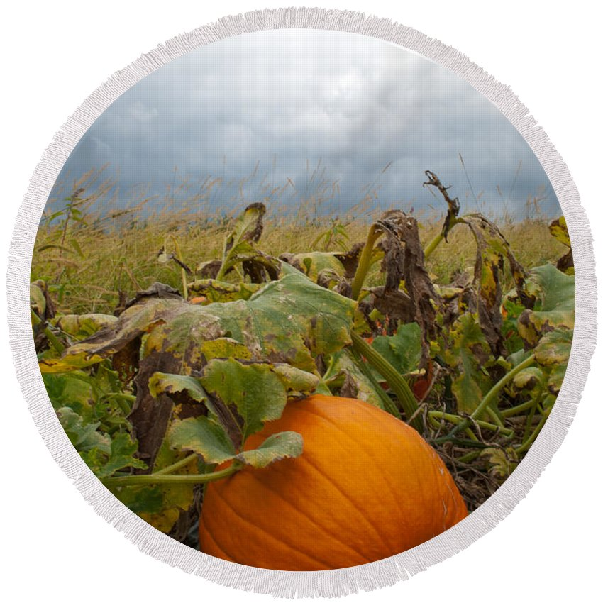Pumpkin Round Beach Towel featuring the photograph The Great Pumpkin by Wayne King