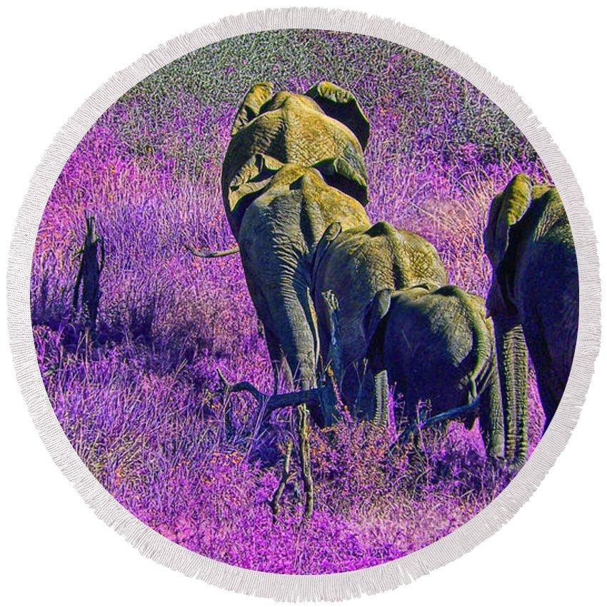 Elephant Bull Round Beach Towel featuring the photograph The Great Trek V2 by Douglas Barnard