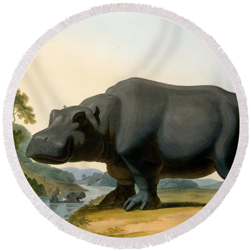 Hippo Round Beach Towel featuring the painting The Hippopotamus, 1804 by Samuel Daniell