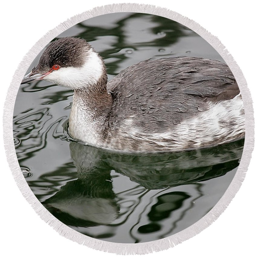 Maine Wildlife Round Beach Towel featuring the photograph The Horned Grebe by Sharon Fiedler