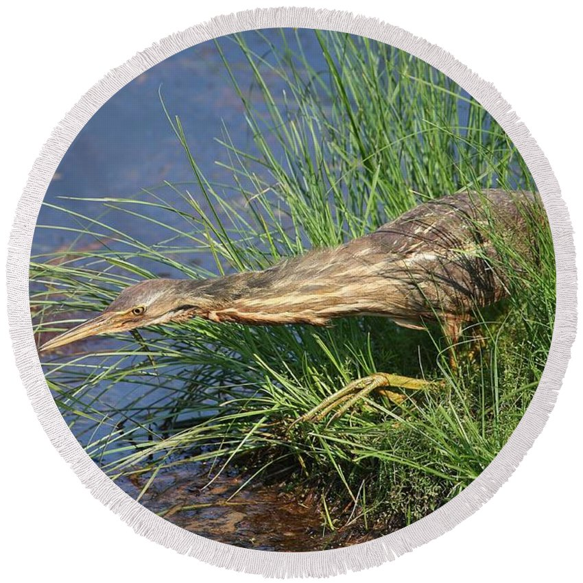 American Bittern Round Beach Towel featuring the photograph The Hunter by Teresa McGill