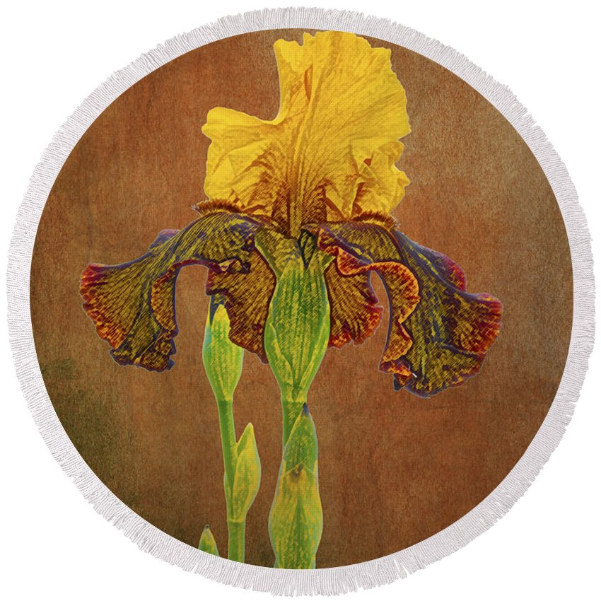 Iris Round Beach Towel featuring the photograph The Kings Prize Iris by Michael Peychich