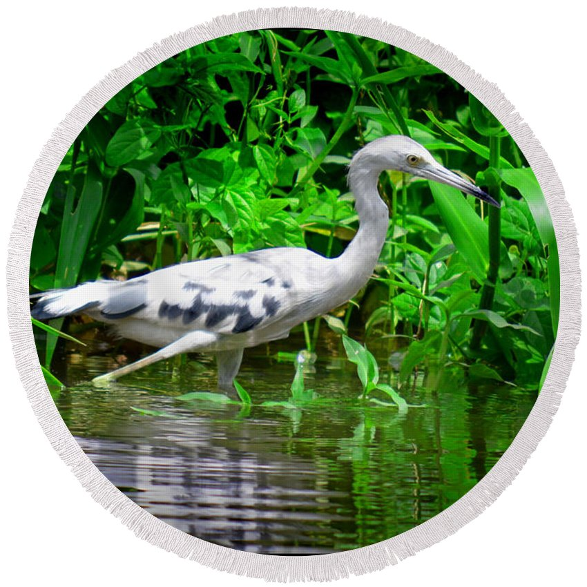 Marsh Round Beach Towel featuring the photograph The Little Blue Heron by Gary Keesler